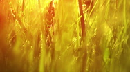 Stock Video Footage of Sunny grass