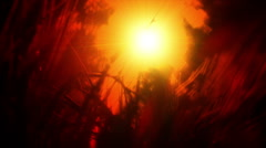 Grass on the background of the setting sun Stock Footage