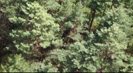 Camcorder is floating above the trees. Stock Footage