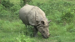 Chitwan Park Stock Footage