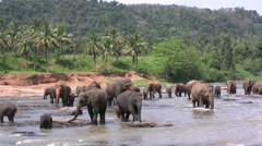 Elephants water river jungle nature scenery Sri Lanka Indian Stock Footage