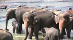 Family of elephants - stock footage