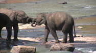 Two young elephants play with each other in Sri Lanka Asia Stock Footage