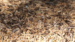 Anthill in forest Stock Footage