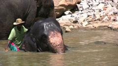 Washing elephant Stock Footage