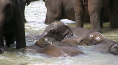 Young elephants play in river, friends, cute, funny animals, water Stock Footage