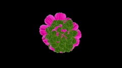 blooming flower with green leaves. - stock footage
