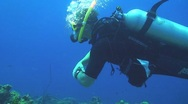 Diving Stock Footage