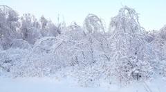Trees under snow Stock Footage
