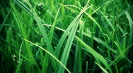 Stock Video Footage of summer grass