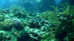Giant clam (Tridacna sp.) closing its shell Stock Footage