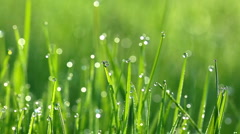 Drops of dew on a green grass Stock Footage