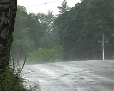 Car on the road in the forest Stock Footage