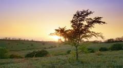 Spring landscape. evening Stock Footage