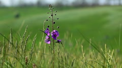 Green grass and spring flowers Stock Footage