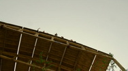 Jumping from a height, jumps with a cord Stock Footage
