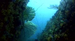 Walls covered in soft coral and sea fans Stock Footage