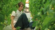 Young Man on Floor Pruning Hydroponic Tomato Plants  (HD) Stock Footage