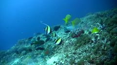 Mixed fishes (parrot, surgeon, box, wrasse...) Stock Footage