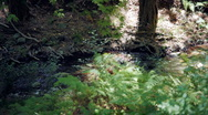Forest spring in Trodos mountains, Cyprus Stock Footage
