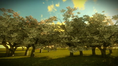 Cherry Trees and Sunrise Time Lapse - stock footage