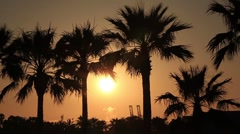 Palm Trees and the Sunset Stock Footage