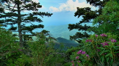 Spring in the moutains 07 Stock Footage