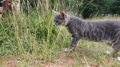 Grey Tabby looks through grass Stock Footage