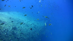 Back of sugar wreck with propellor, amazing visibility Stock Footage