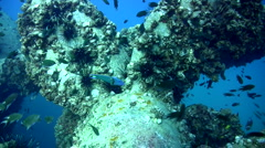 Propellor of sugar wreck, amazing visibility - stock footage