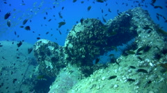 Propellor of sugar wreck, amazing visibility 2 - stock footage