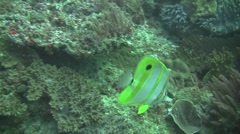 Colourful reef fish. Stock Footage