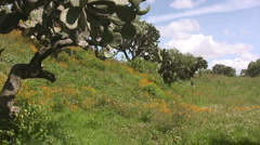 Mexican landscape Stock Footage