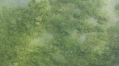 Marine life on seawater lens Stock Footage