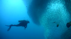 Stock Video Footage of Gigantic school of sardines or silverside (Atherinidae) with divers 3