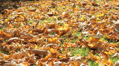 autumn leafs - stock footage
