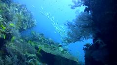 Nice underwater landscape, Tioman Island Stock Footage