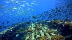 Top of Sugar Wreck, Perhentian Islands with amazing visibility 3 - stock footage