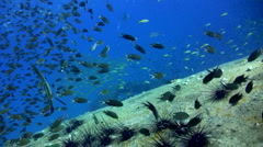 Top of Sugar Wreck, Perhentian Islands with propellor, amazing visibility - stock footage
