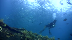 Huge school of bigeye trevally (Caranx sexfasciatus) with diver Stock Footage