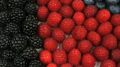 Magnificent Raspberries Blueberries Blackberries Close Up - stock footage