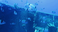 Stock Video Footage of Zenobia ship wreck with school of small silver fishes, Cyprus