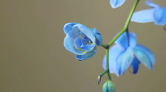 Blue Orchid Track 02 Stock Footage