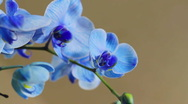 Blue Orchid Track Stock Footage