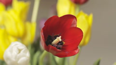Red tulip track Stock Footage