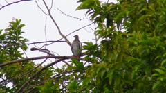 Stock Video Footage of Pigeon on branch under rain V3
