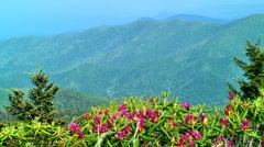Spring in the moutains 09 Stock Footage