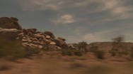 Stock Video Footage of Joshua Tree Tracking Shot from Car