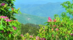 Spring in the moutains 11 Stock Footage