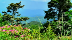 Spring in the moutains 10 Stock Footage